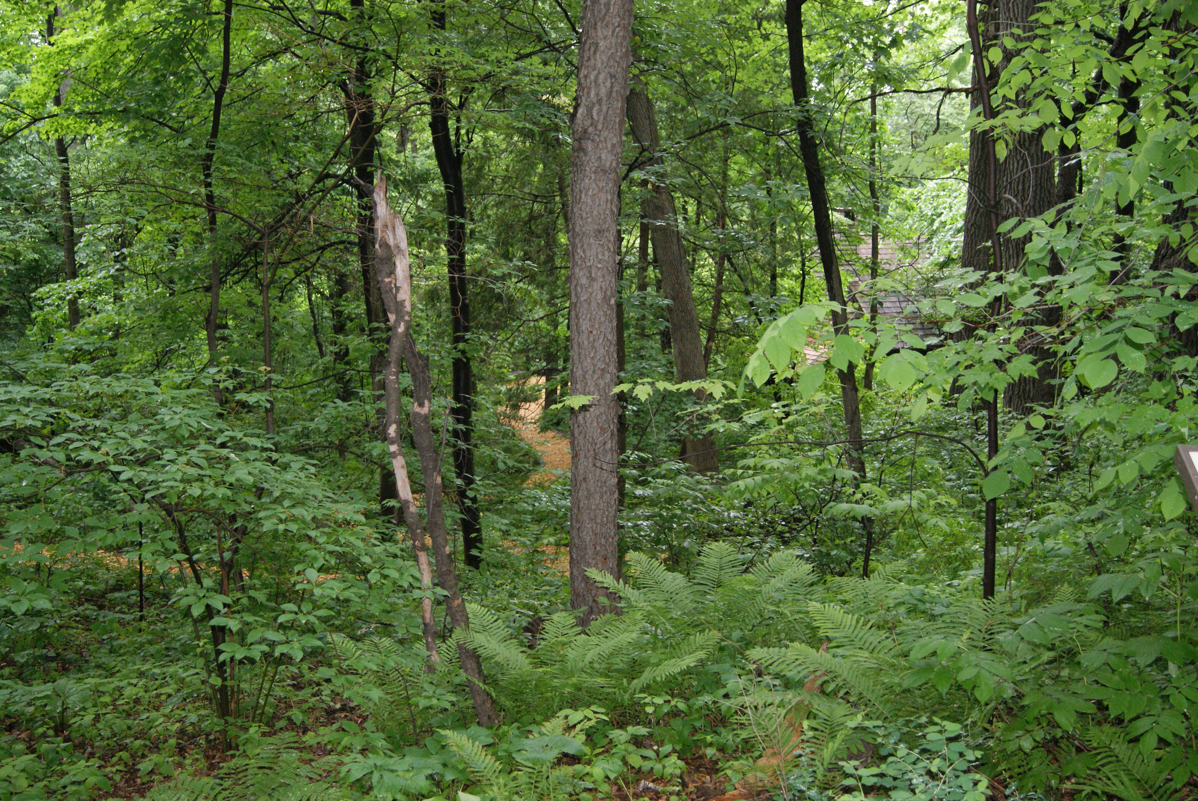 deciduous forests The temperate deciduous forest biome is an area that is very cool and rainy most of the time in the fall the leaves will fall off of the trees the following spring they will emerge again.